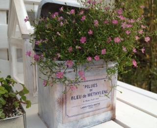 空き缶リメイク・小さな花を植えて
